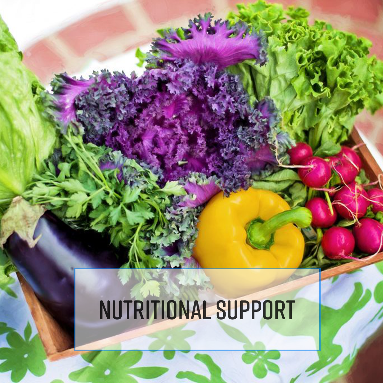 Kinesiology for Nutritional Support